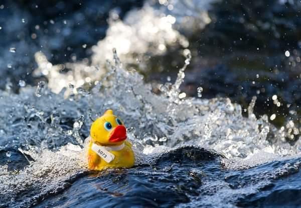 32nd Annual Rennie's River Duck Race Logo